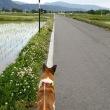 お散歩風景
