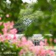 昭和記念公園、盛夏。