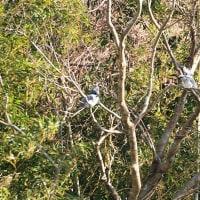 Vol.2023   日南の野鳥達にも春の動きが・・ (Photo No.14069)