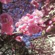 梅里公園の梅