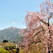 桜と市房山