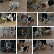 パピーパーティ-開催しました【ALOHA塾】  犬のしつけ教室@アロハドギー