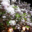 ♪♪ 造幣局の通り抜け 桜