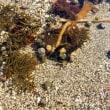 2018・5・23 横須賀市佐島の横須賀市自然・人文博物館附属天神島臨海自然教育園 神奈川で私が一番好きな海