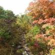 北海道低山紀行 79 南暑寒岳・雨竜沼湿原(後編)