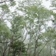 霧降高原ハイキング(丸山コース)