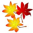 色彩が鮮やかな秋をお楽しみください。