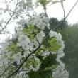 待望の春が来ました!!