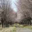 春爛漫☆桜や水芭蕉が見ごろです。