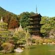 香山公園~梅は蕾~