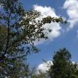 9月14日(木)のつぶやき