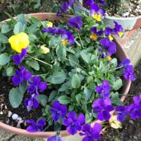 今日のお花たち