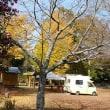 黄色のキャンプ場