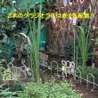 8月中旬の花壇