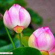 170624宇治市植物公園