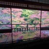 「紅葉/瑠璃光院」