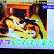 9/25 ミーちゃんが連れて来た子猫たち