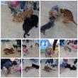 パピーパーティ開催しました【ALOHA塾】  犬のしつけ教室@アロハドギー