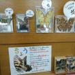 昆虫展&オオグソクソムシ