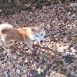 森林公園の紅葉はちょうど見頃!
