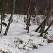 2017.12 冬のアルプスと釣り