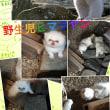 ペルシャ猫ベビーが囲炉裏〜ナチュラルLIFE⁉︎夏〜動画付き☆(=^x^=)