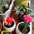 我が家の多肉植物
