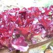 カラフル野菜は、紫色(purple or violet)を狙う。