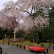 (2019年改訂版)京都・桜の名所勝手にランキングその3(計147か所)