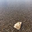 日本海の砂浜散歩