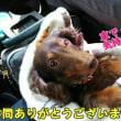 5月の花火☆ ~奈良(ランチ)~