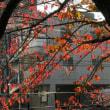 前の桜が紅葉