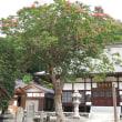 サルスベリ、宝蔵寺