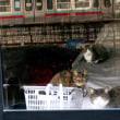 『雨ノチ晴レ』でランチして、敷島公園のカモを眺めて、芝麻醤とラー油つくった成人の日です
