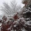 去年の今日は、椛雪(もみじゆき)