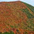 桑沼は紅葉の景色