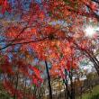 雑木林 紅葉