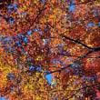筑波山神社の風景 11月19日 宮脇駅周辺の紅葉
