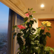 新高輪プリンスホテルの花火のプロジェクションを見ました