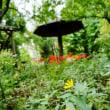 秋を彩る野草たち(赤塚植物園)