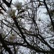 今日のお花見は寒かったです~~!