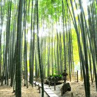 7月のカバー画像「報国寺の竹林」
