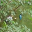 9月17日の鳥撮り散歩・・・