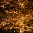 JRゲートタワー Christmastree