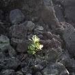 Volcanic Deserts of Mt. Mihara