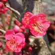 春のきざし