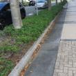 街路樹も秋の準備