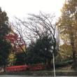 熊谷市NEWモデルハウスからマリノランチ♡
