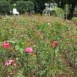 与野公園へバラを見に行きました 2017年9月23日