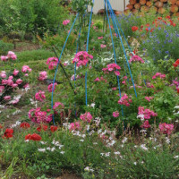 3年目の庭作りの反省